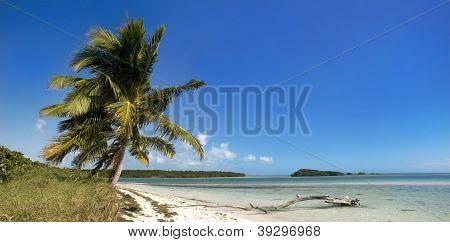 Sommer-Panorama-Landschaft mit Palmen