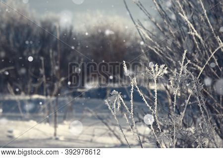 Snow White Grass Background With Copy Space. Dark Blue Winter Snowy Night. Nobody. Forest Winter Bac