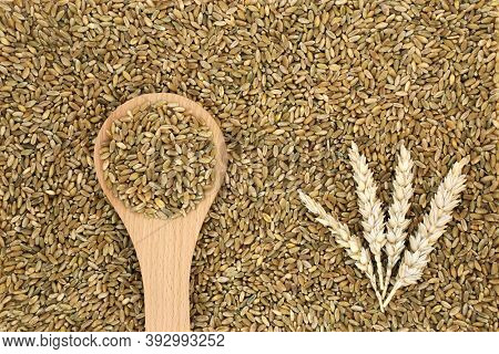 Organic freekeh rice grain health food forming a background with wheat sheaths. High in protein, vitamins, fibre, minerals with carotenoids for healthy ageing also good for bone & muscle health.