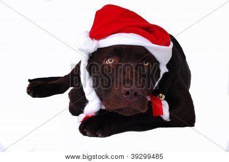 Dog Laying With Santa's Hat