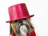 A Shih Tzu in a glittery top hat has a quizzical look. poster