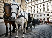 Horse-driven carriage at Hofburg palace Vienna Austria poster