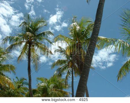 Tree Tops Bahamas2