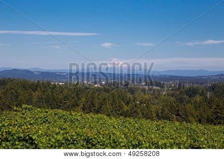 View Of Mount Hood Oregon