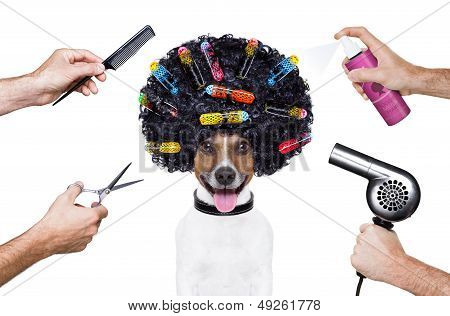 poster of hairdresser scissors comb dog spray spa wellness