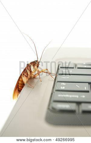 Cockroach climbing on keyboard