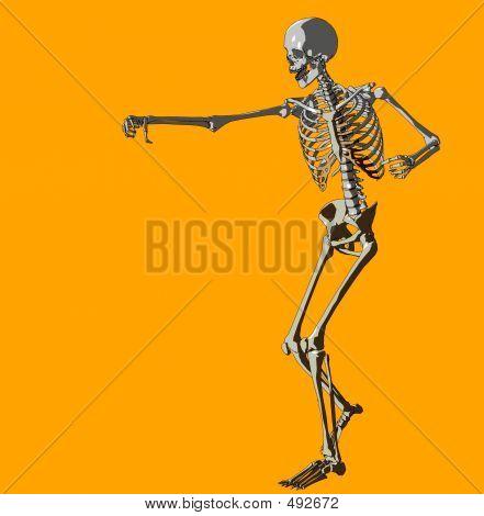 Bone 147