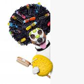 wellness dog with hair rollers and sponge beside a banner poster