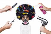 hairdresser scissors comb dog spray spa wellness poster