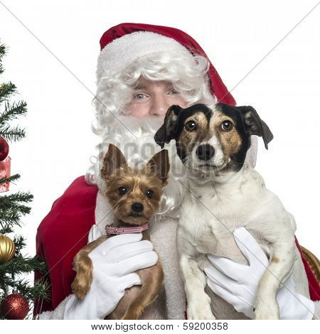 Close-up of Santa Claus holding two lapdogs, isolated on white