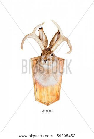 The jackalope is a mythical animal of North American folklore Jackalope head mount (a  humorous joke by a taxidermist using both a jackrabbit and antlers from a deer) isolated on white background