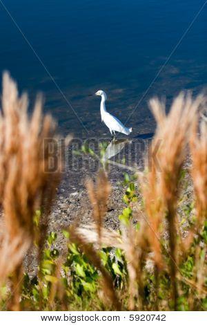 Wetlands Wildlife