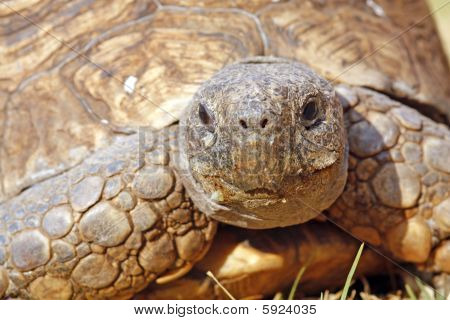 Close up of a tortoise's head