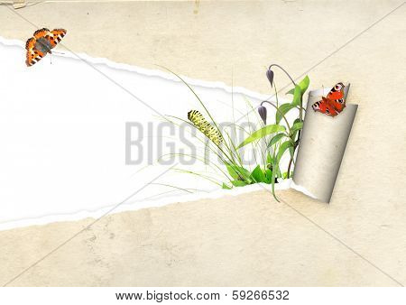 Green leaves and insect in paper hole