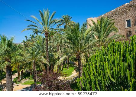 Elche Elx Alicante el Palmeral Palm trees park and Altamira Palace Spain