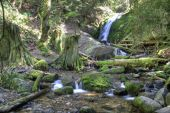 Coal Creek Falls a Pacific Northwest waterfall in spring poster