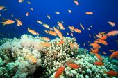 Beautiful Coral Reef with Tropical Fish in the Red Sea poster