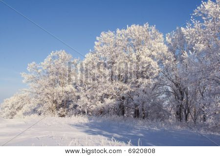 Winter landscape - edge of a groove and field covered with deep snow