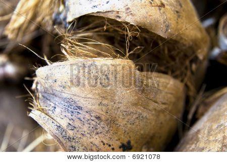 Coconut Nutshell