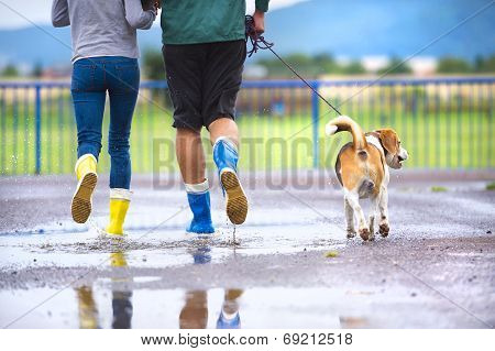 Dog walk in rain