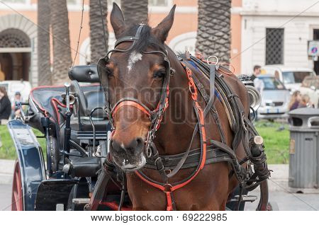 Horse And Chariot