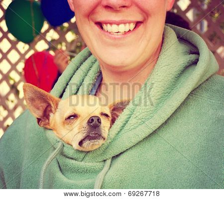 a chihuahua poking his head out of a person's jacket toned with an instagram like filter poster