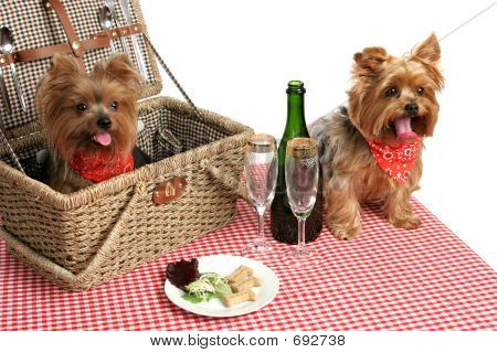 Puppies On Picnic