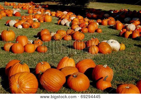 Pumpkin Patch two
