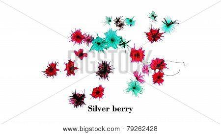 Silver Berry Micrograph