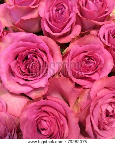 Bouquet Of Magenta Roses