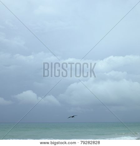 Pelican Flying Over Turquoise Water