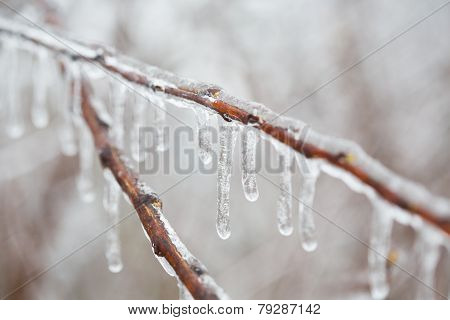 Isolated Branch With Ice