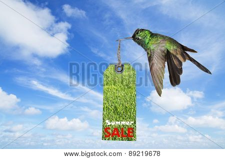 Summer sale concept with a hummingbird carrying a sale tag