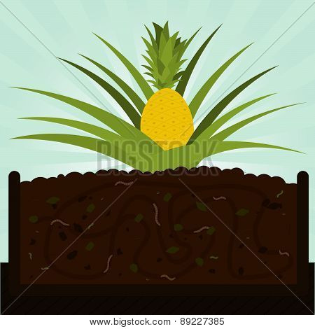 Pineapple Tree And Compost