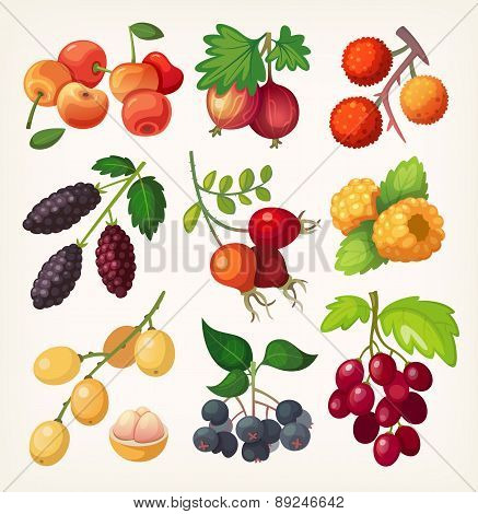 Juicy Colorful Berry Icons.