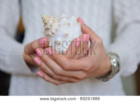 Beautiful sea shell in female hands