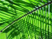 Sunshine shining through palmleaves in Sri Lanka, Kogalla Beach poster