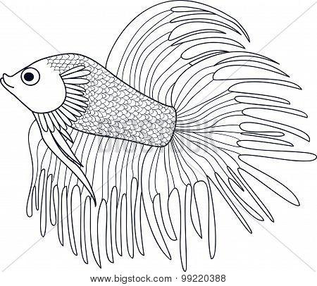 Hand Drawn Fish Cockerel