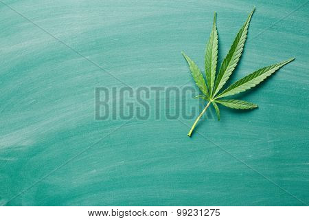 cannabis leaf on a chalkboard