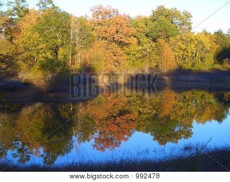 Autumn Trees Reflecting In A Pond