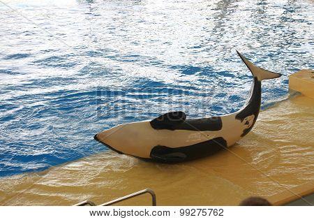Whales Show In Loro Parque