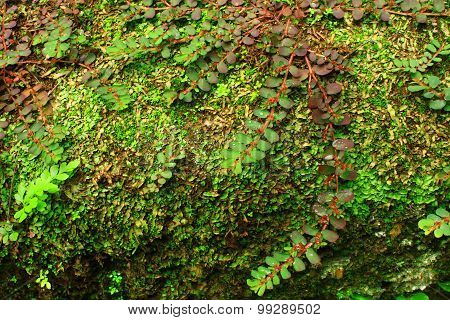 Fern and Moss Vegetation on Wall