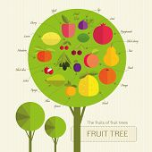 Conditional fruit tree with fruits that grow on trees from different countries. Each fruit was signed. Gardening. poster