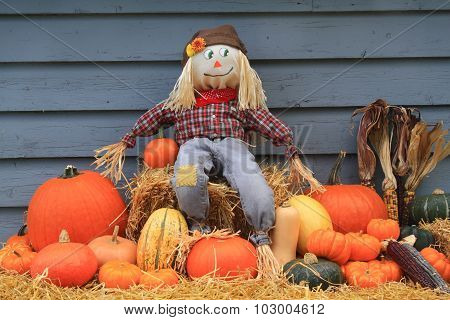 Harvest And Thanksgiving And Scarecrow