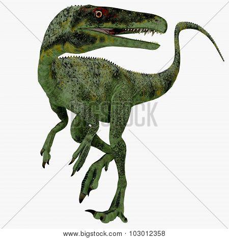 Juravenator Jurassic Dinosaur