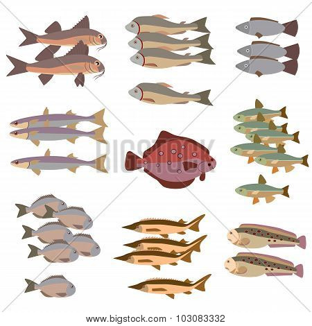 set of different fish flat style color vector illustration