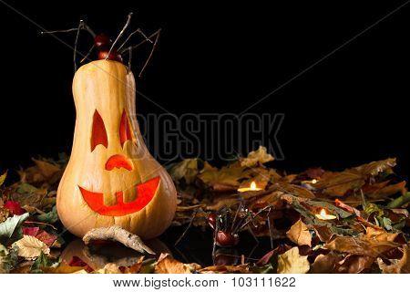 Smiling Pumpkin Halloween With Spider