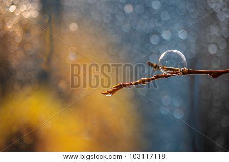 Vozdushny bubble on a branch