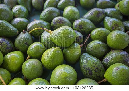 A large pile of ripe green healthy avacados at an outdoor market