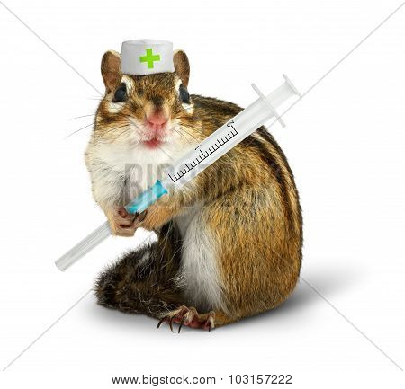 Vet Concept, Funny Squirrel With Syringe And Doctor Hat